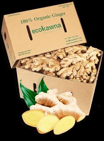 Ecokawana - Jengibre kion